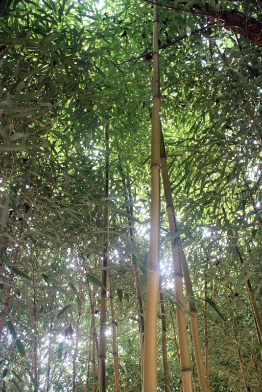 Sun Through the Bamboo